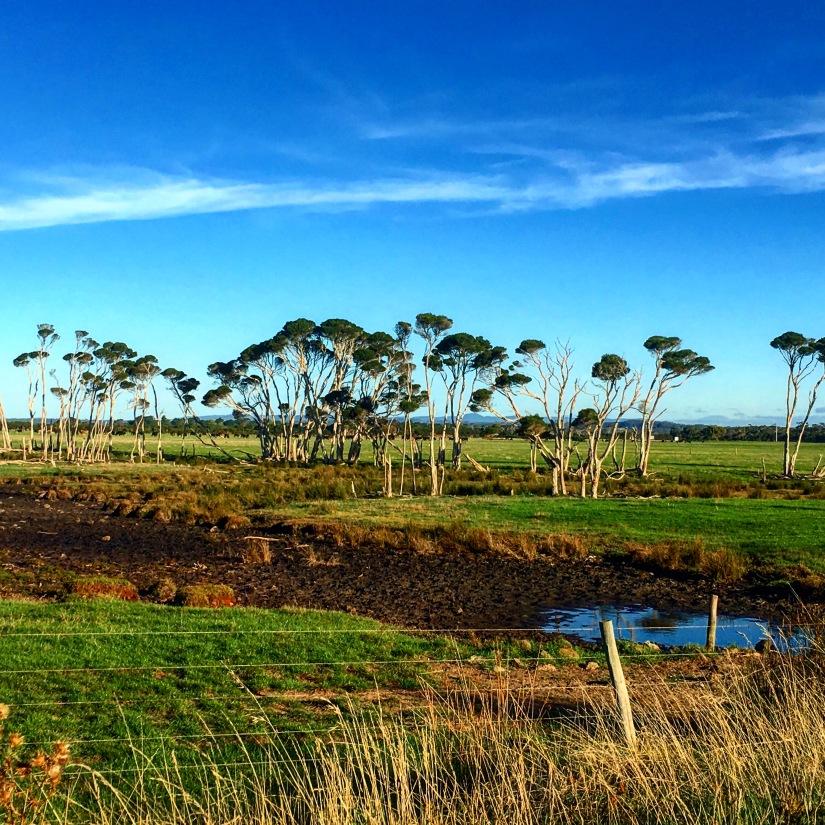Northern Tasmania (1)